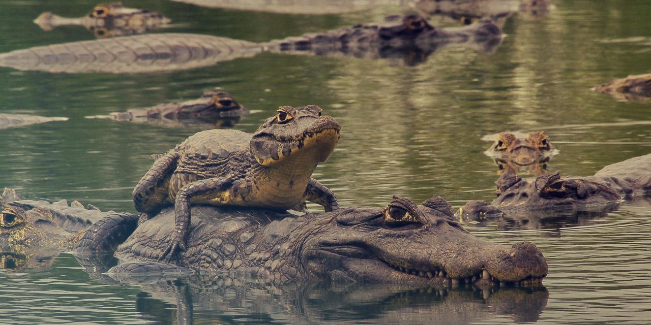 Pantanal com a família